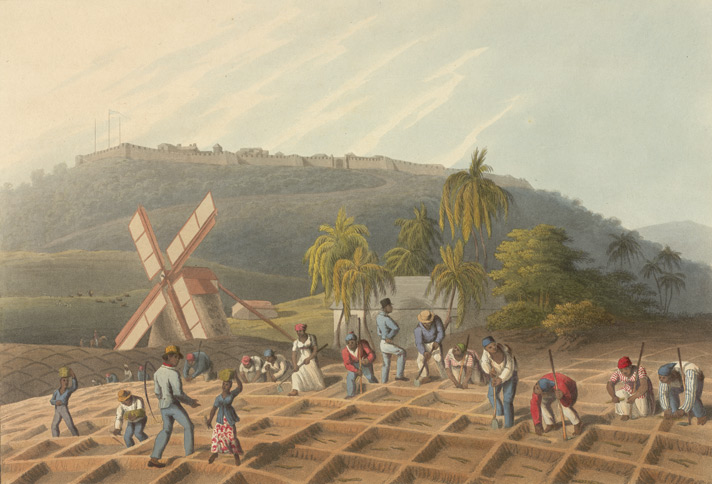 Planting The Sugar Cane, Antigua